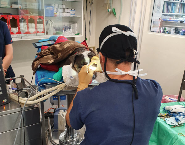 Veterinarian using an equipment to a dog