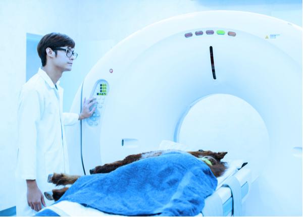 Veterinarian doctor working in MRI